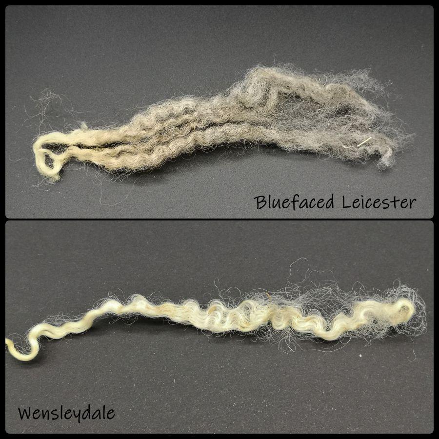 BFL und Wensleydale Fasern